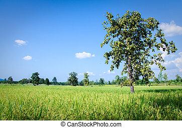 樹, 米, fields.
