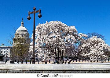 樹, 開花, 國會大廈大樓