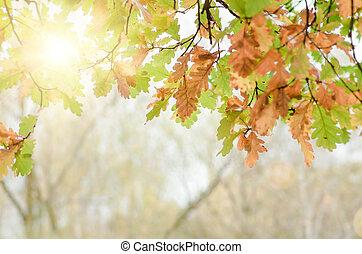 樹, 離開, 秋天, 橡木, 自然