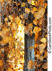 樹, 離開, 黃色, 秋天