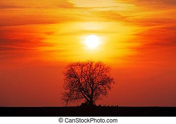 樹, 黑色半面畫像, 由于, 太陽, 以及, 紅色, 橙, 黃色的天空