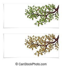 樹, card., 事務, 飛行物, 秋天, acorns., 橡木, 被隔离, 插圖, 大, 背景。, 綠色, 分支, 邀請, 白色, yellowed, 或者, 卡片