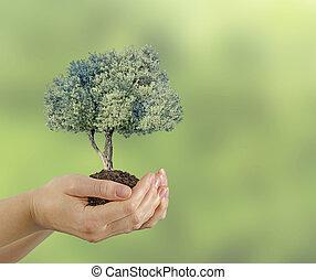 橄欖, 樹, 禮物, 手