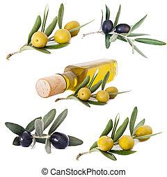 橄欖, 油, 彙整