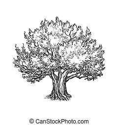 橄欖, 矢量, 樹, 插圖