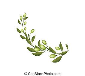 橄欖, 背景, 綠色, 分支, 新鮮, 白色