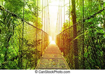 橋, arenal, costa, 公園, 掛かること, rica