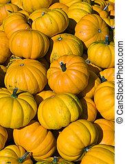橙, 明亮, 彙整, 南瓜