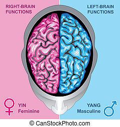 機能, 脳, 権利, 人間, 左