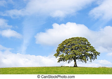 橡木树, 美丽