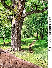 橡木, 公園