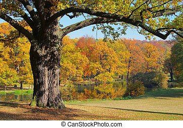 橡木, 樹, 秋天