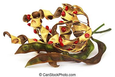 檀香木, 種子, 由于, 干燥, 豆