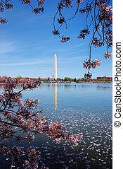 櫻桃花, 華盛頓特區, 紀念碑