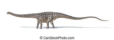 正しい, 側, 科学的に, d, 間, 歩くこと。, 低下, 切り抜き, shadow., レンダリング, 3, dinosaur.., diplodocus, 背景, included., 道, photorealistic, 白, 見られた