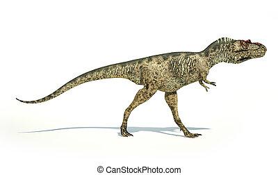 正しい, 切り抜き, 科学的に, 代表, 低下, 恐竜, 側, albertosaurus, 白,...