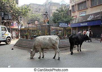歩き回りなさい, 西, 通り, ベンガル, kolkata, インド, 牛