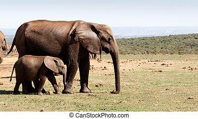 歩くこと, 彼の, 象, ブッシュ, 母, 赤ん坊, -african