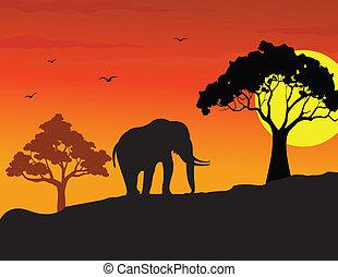 歩くこと, 象, シルエット