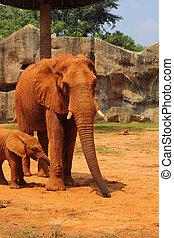 歩くこと, 象, 母, 赤ん坊, outdoors., elephant.
