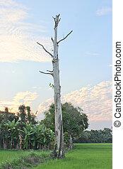 死樹, 以及藍色, 天空