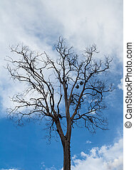 死樹, 針對, 藍色的天空, 背景