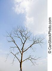 死, 大的樹, 由于, 藍色的天空