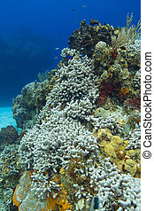 死, 珊瑚礁, 由于, fish