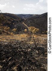 残物, 火, 森林