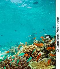 殖民地, ......的, 小, 魚, 上, the, 礁石