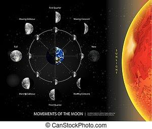 段階, イラスト, 月, 現実的, ベクトル, 月, 8, 動き