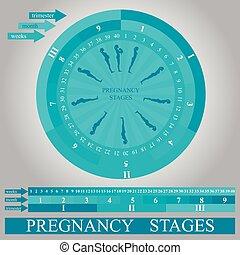 段階, 印刷, ベクトル, 妊娠