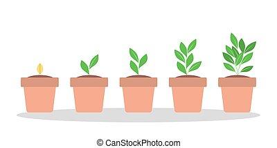 段階, 植物, 成長, 緑, ポット
