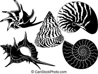 殻, かたつむり