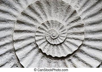 殻, 化石, 中