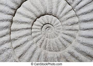 殻, 化石