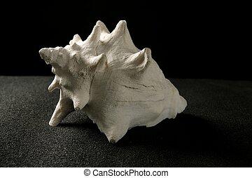 殻, 海カタツムリ, 巻き貝の殻, 黒い背景, 白