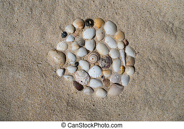 殼, 在海灘上, 假期, 記憶