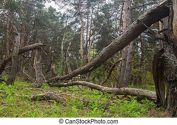 毀滅, 風暴, 森林