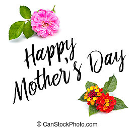 母の日, タイプ, ∥で∥, 花
