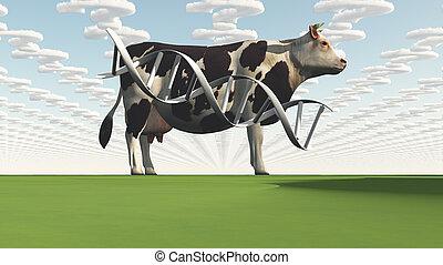 母牛, 以及, 問題, 云霧, gmo