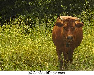 母牛, 動物