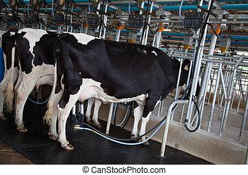 母牛, 擠奶, 設施