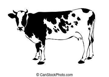 母牛, 黑色半面畫像