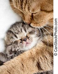 母親, 貓, 擁抱, 很少, 小貓