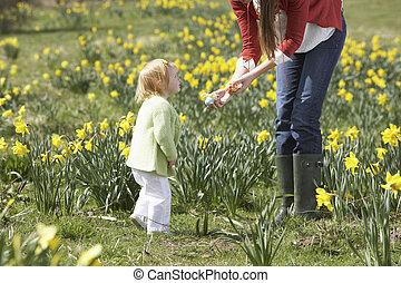 母 と 娘, 中に, ラッパズイセン, フィールド, ∥で∥, 飾られる, イースターエッグ