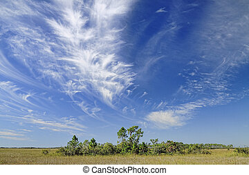 毛状突起, フロリダ, 上に, 雲, everglades