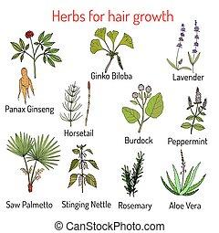 毛, ハーブ, 成長, 自然, 心配