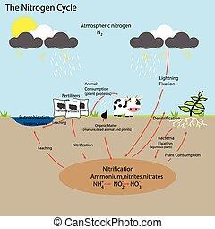 氮, 周期