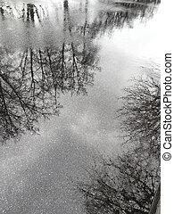 水たまり, 舗装, 雨, 反映された, シルエット, 木